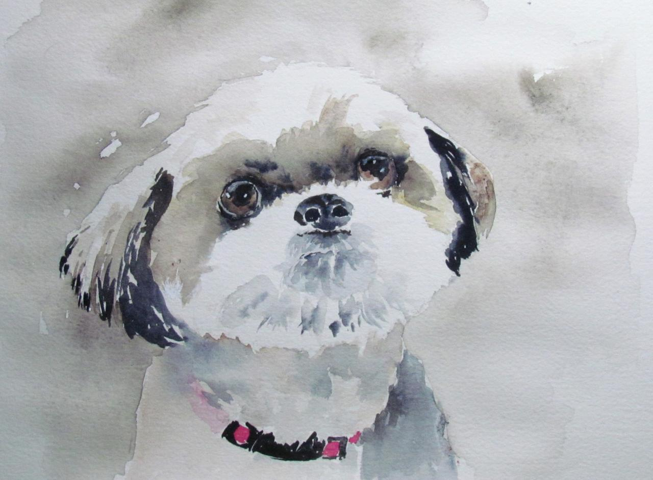 Annabelle - Shih Tzu - non disponible