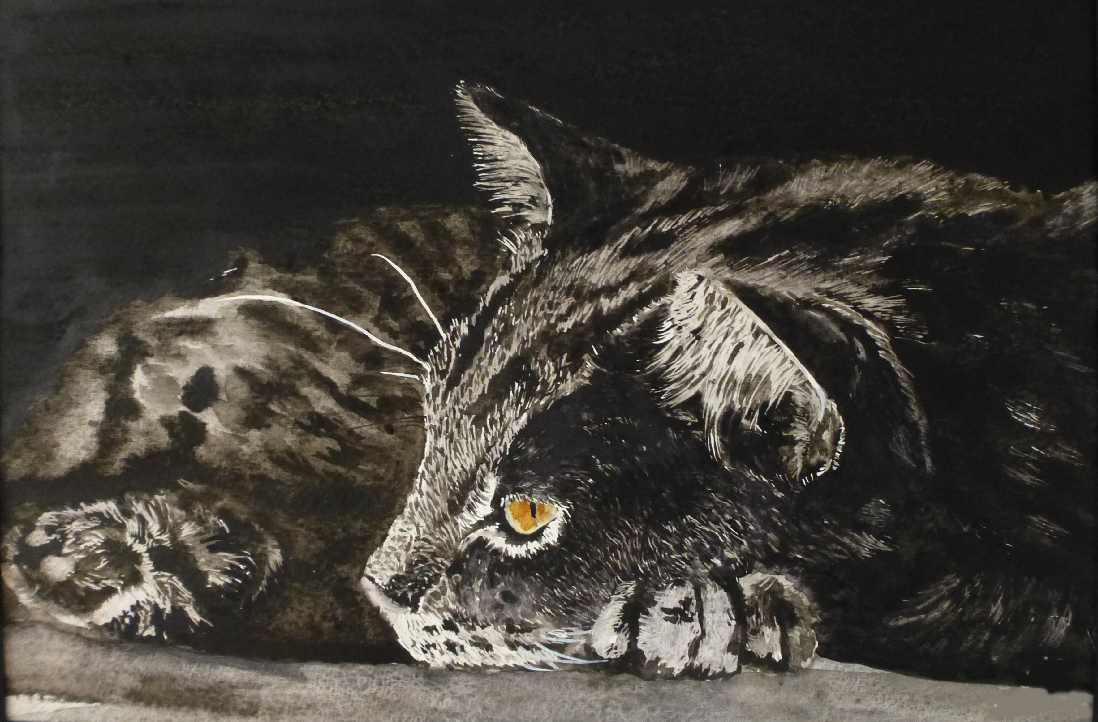 chat - clair obscur